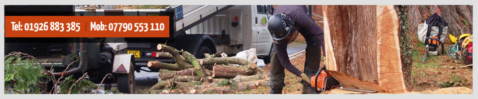 domestic tree care services -chainsaw tree cutting